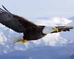 Învaţă, trăieşte, zboară şi mori ca un Vultur